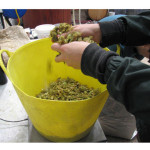 Breaking up hops